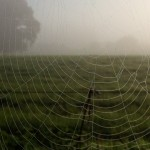 Autumn mist over the fields | Flying Colours Foster Care